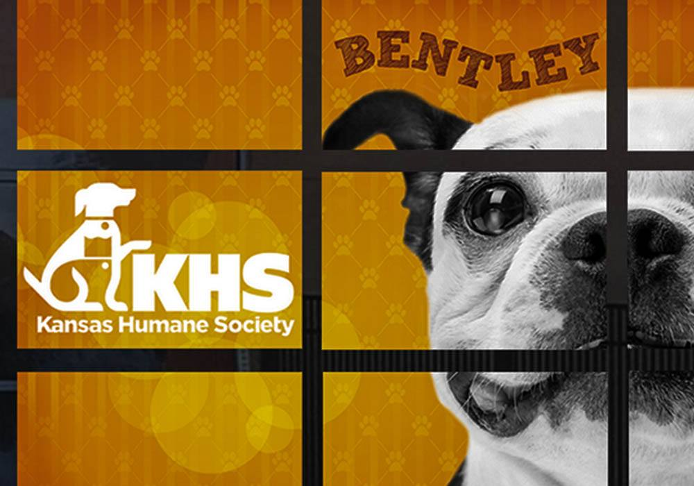Window Decals for the Kansas Humane Society
