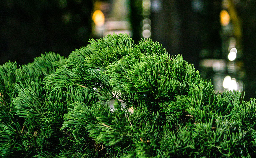 A HOW-TO GUIDE FOR EVERGREEN CONTENT